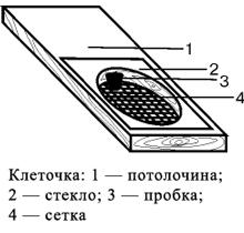 клеточка