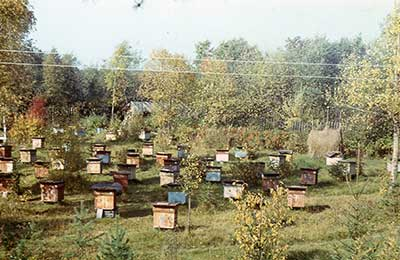 Что сделать чтобы пчелы не роились Своими руками - Как сделать самому 64