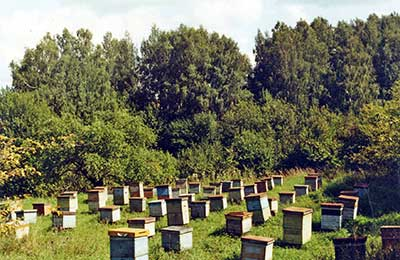 Журнал Пчеловодство - Еще раз о проблеме борьбы с клещем варроа