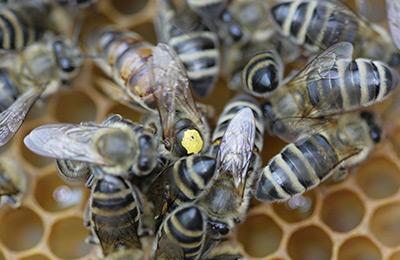 Гумилев и точно пчелы в улье