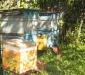 Адаптивная технология содержания пчел