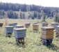 Органическое пчеловодство и органический мед