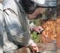 Рекомендуемые растения для лечения пчел