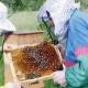 Несколько мыслей о людях, у пчел пребывающих