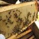 Удалители пчел