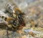 Так удобнее подкармливать пчел