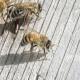 О теории Карла Фриша и о некоторых других способах пчеловодства