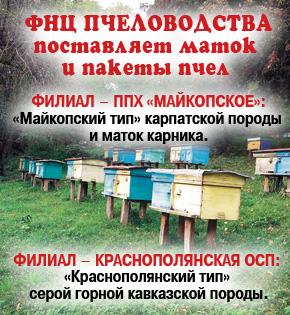 Предлагаем маток и пакеты пчел