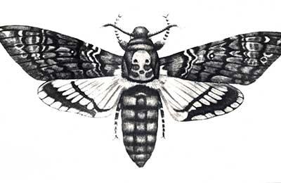 """Бабочка """"мертвая голова"""""""