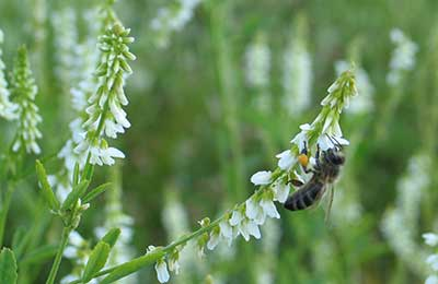 Конвейер для пчел элеватор уикипедия