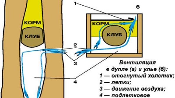 Вентиляция в дупле и улье