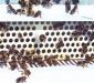 пыльцеуловитель