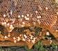 маточники китайской восковой пчелы