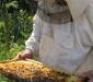 осмотр пчел на пасеке