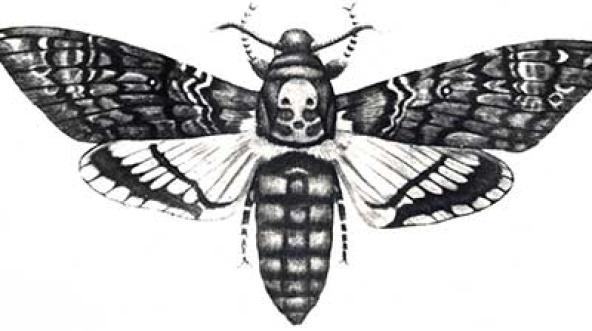 вредители пчел