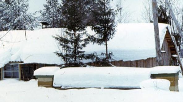 зима, ульи